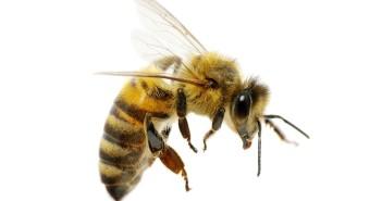 allergie-prevenzione-puntura-insetti