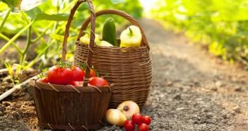 dati-ministero-agricoltura-biologico-2014