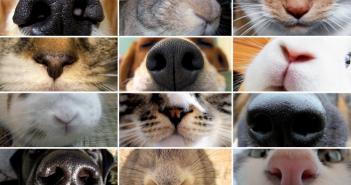 campagna-veterinari-milano-fumo-animali-domestici