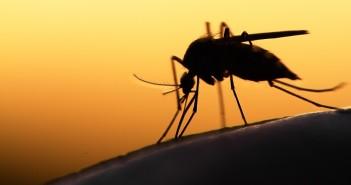 prevenzione-viaggi-zika-ministero-salute