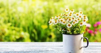 consigli-allergie-stress-cefalee-primavera