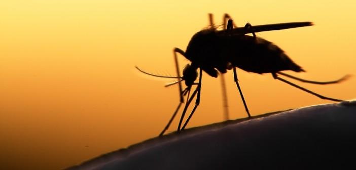prevenzione-diffusione-zika-trasfusioni-donatori