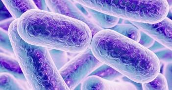 oms-lista-dodici-batteri