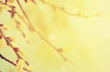 allergie-cefalee-bambino-gesu