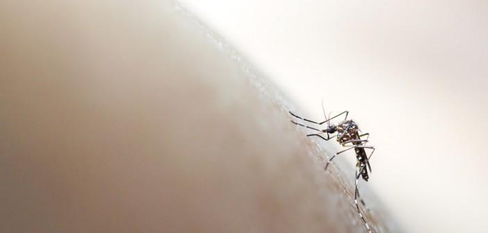 chikungunya-lazio-donazioni-sangue