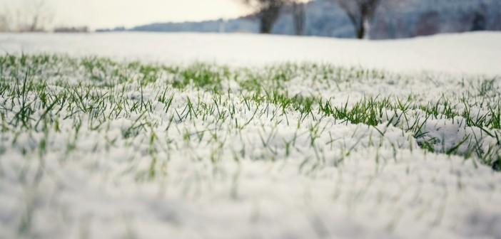 segnalazione-danni-neve-gelo-lazio