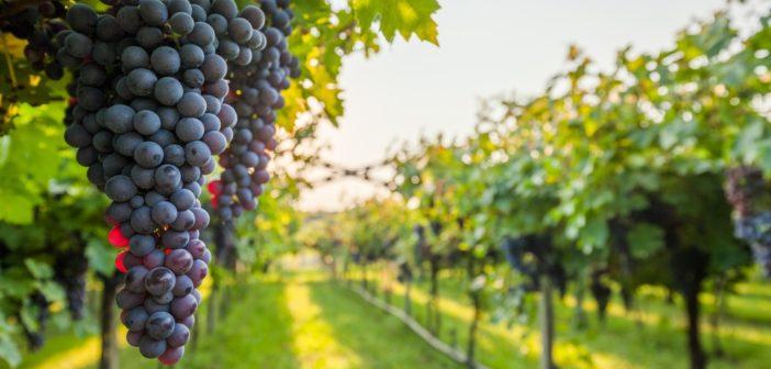 Regione Lazio, indetto il nuovo bando OCM vino