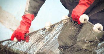bandi-pesca-regione-lazio-2019