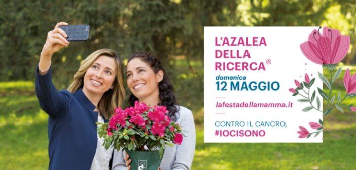 piazze-azalea-ricerca-2019