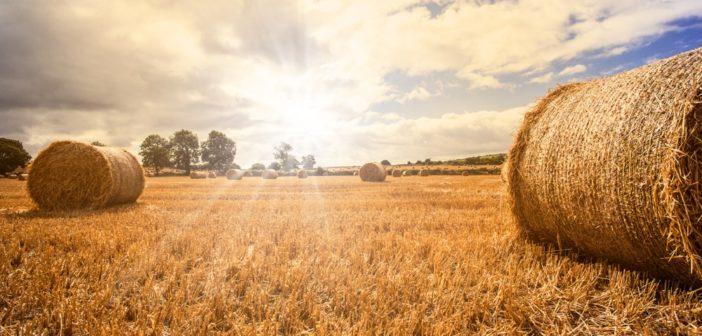 bandi-regione-lazio-agroalimentare-2019